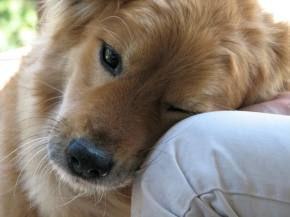 How to Love Dogs When You Can't Have One