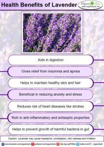 lavenderinfo